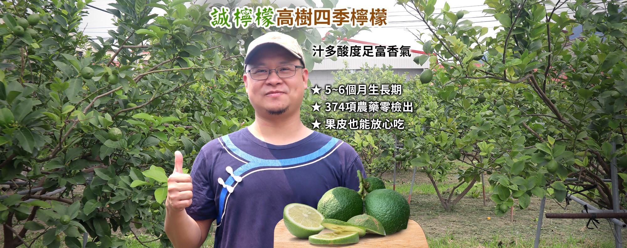 【誠檸檬】屏東高樹四季檸檬