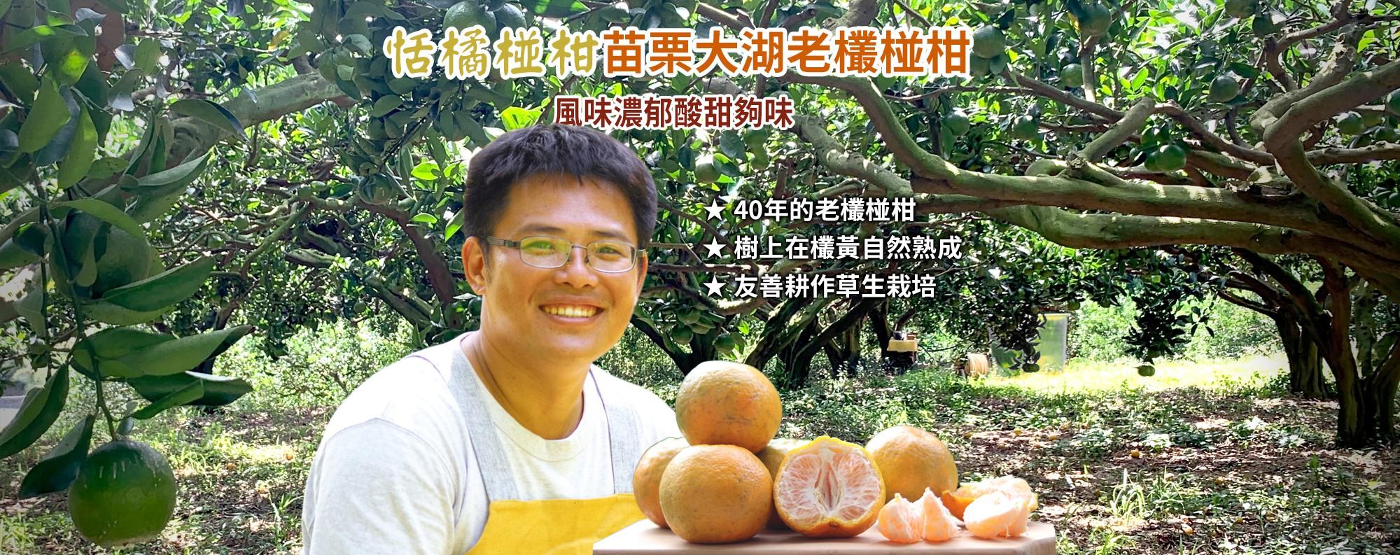 【恬橘椪柑】苗栗大湖老欉椪柑